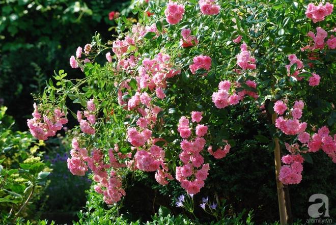 Khu vườn hoa nở suốt bốn mùa đẹp như trong mơ của đạo diễn Nguyễn Hải Anh - Ảnh 30.