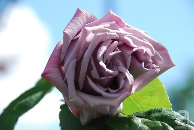 Khu vườn hoa nở suốt bốn mùa đẹp như trong mơ của đạo diễn Nguyễn Hải Anh - Ảnh 31.