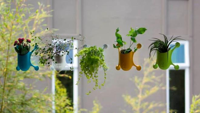 Những nông dân thành phố sẽ thích mê chậu cây treo Livi vừa xinh xắn vừa tiết kiệm diện tích - Ảnh 6.