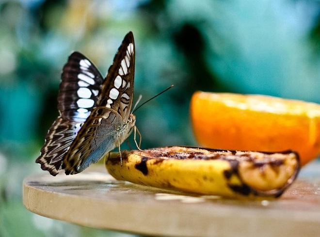 Với 9 cách làm cực đơn giản, vỏ chuối sẽ trở thành thần dược cho khu vườn nhà bạn  - Ảnh 8.