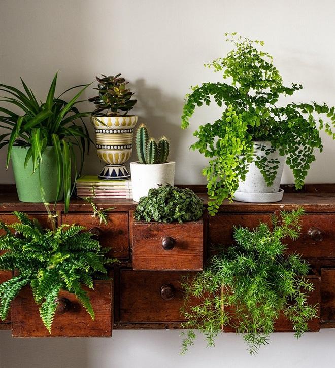 Bạn đã biết đến 13 ý tưởng trồng cây xanh từ đồ vật cũ để trang trí nhà cực đẹp mắt chưa? - Ảnh 2.