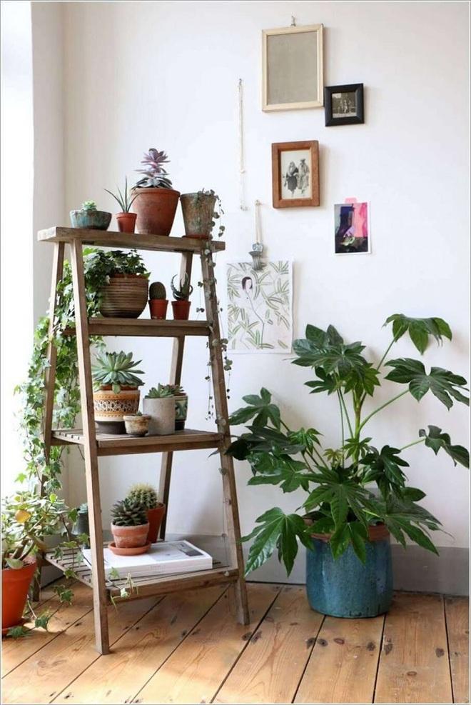 Bạn đã biết đến 13 ý tưởng trồng cây xanh từ đồ vật cũ để trang trí nhà cực đẹp mắt chưa? - Ảnh 3.