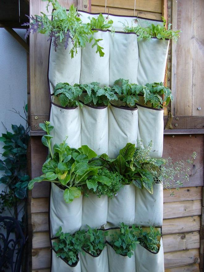 Bạn đã biết đến 13 ý tưởng trồng cây xanh từ đồ vật cũ để trang trí nhà cực đẹp mắt chưa? - Ảnh 5.