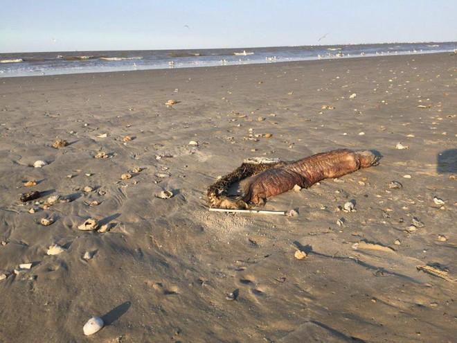 Phát hiện quái vật không có mắt, răng nhọn tua tủa trôi dạt vào bờ biển sau siêu bão - Ảnh 4.