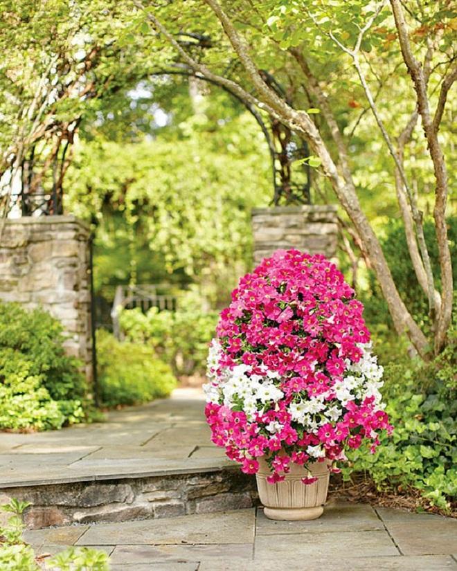 Không cần là người làm vườn giỏi bạn vẫn có thể trang trí sân vườn ấn tượng như thế này - Ảnh 1.
