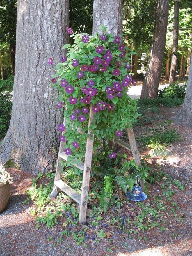 Không cần là người làm vườn giỏi bạn vẫn có thể trang trí sân vườn ấn tượng như thế này - Ảnh 7.