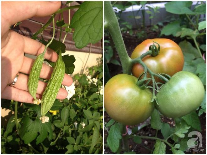 Khu vườn vỏn vẻn 5m² trên ban công nhà phố nhưng như một trang trại rau quả sạch giữa lòng Thủ Đô - Ảnh 19.