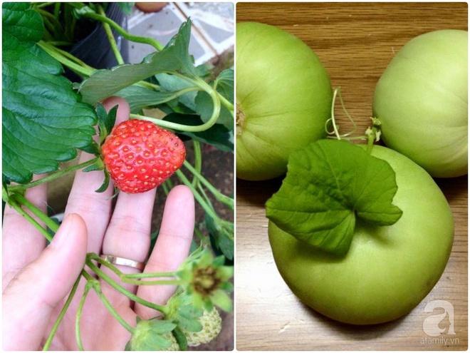 Khu vườn vỏn vẻn 5m² trên ban công nhà phố nhưng như một trang trại rau quả sạch giữa lòng Thủ Đô - Ảnh 24.