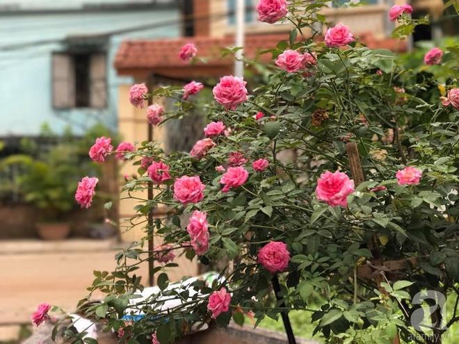 Có một khu vườn hồng rộng gần 1000m² đẹp như xứ sở thần tiên giữa lòng Hà Nội - Ảnh 1.