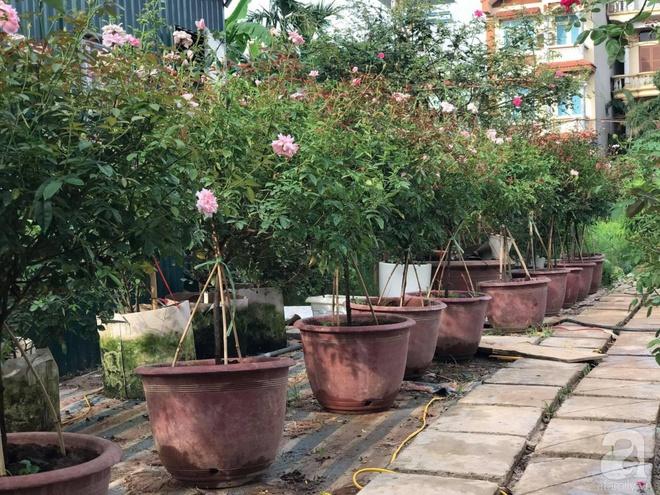 Có một khu vườn hồng rộng gần 1000m² đẹp như xứ sở thần tiên giữa lòng Hà Nội - Ảnh 2.