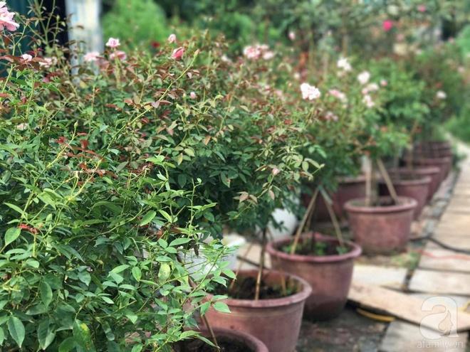 Có một khu vườn hồng rộng gần 1000m² đẹp như xứ sở thần tiên giữa lòng Hà Nội - Ảnh 3.