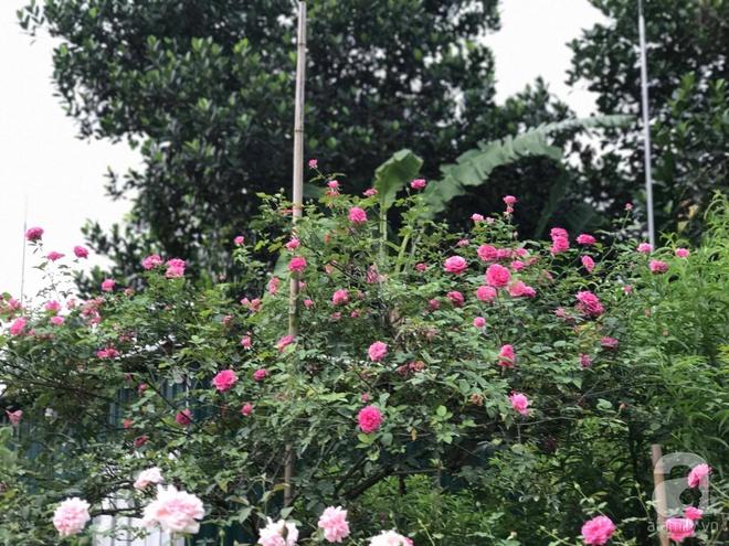 Có một khu vườn hồng rộng gần 1000m² đẹp như xứ sở thần tiên giữa lòng Hà Nội - Ảnh 13.