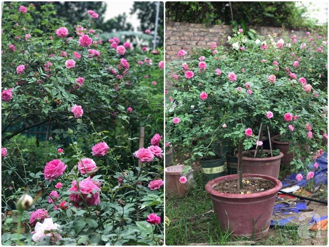 Có một khu vườn hồng rộng gần 1000m² đẹp như xứ sở thần tiên giữa lòng Hà Nội - Ảnh 19.
