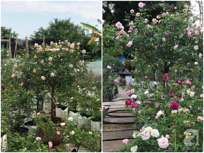 Có một khu vườn hồng rộng gần 1000m² đẹp như xứ sở thần tiên giữa lòng Hà Nội - Ảnh 20.
