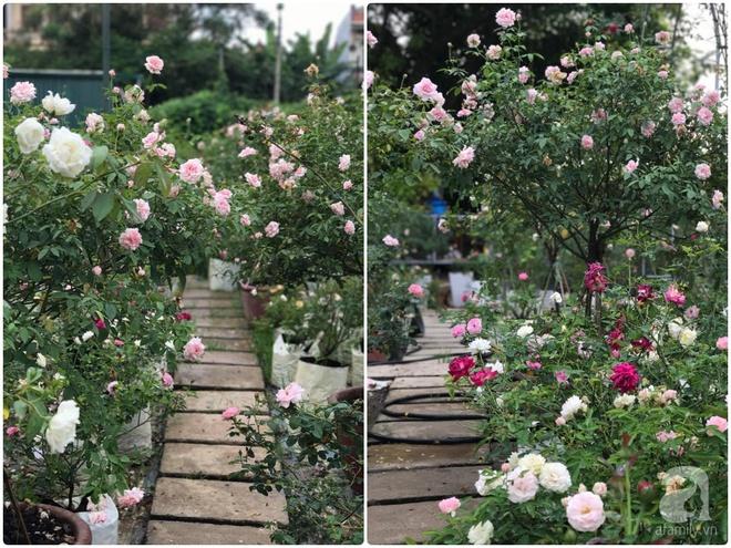 Có một khu vườn hồng rộng gần 1000m² đẹp như xứ sở thần tiên giữa lòng Hà Nội - Ảnh 21.