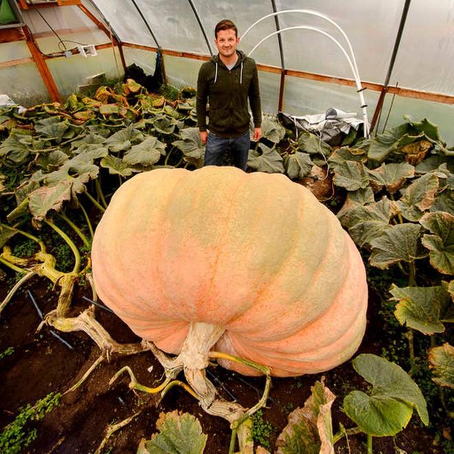 Không thể tin nổi quả bí ngô khổng lồ nặng tới gần 1 tấn - Ảnh 1.
