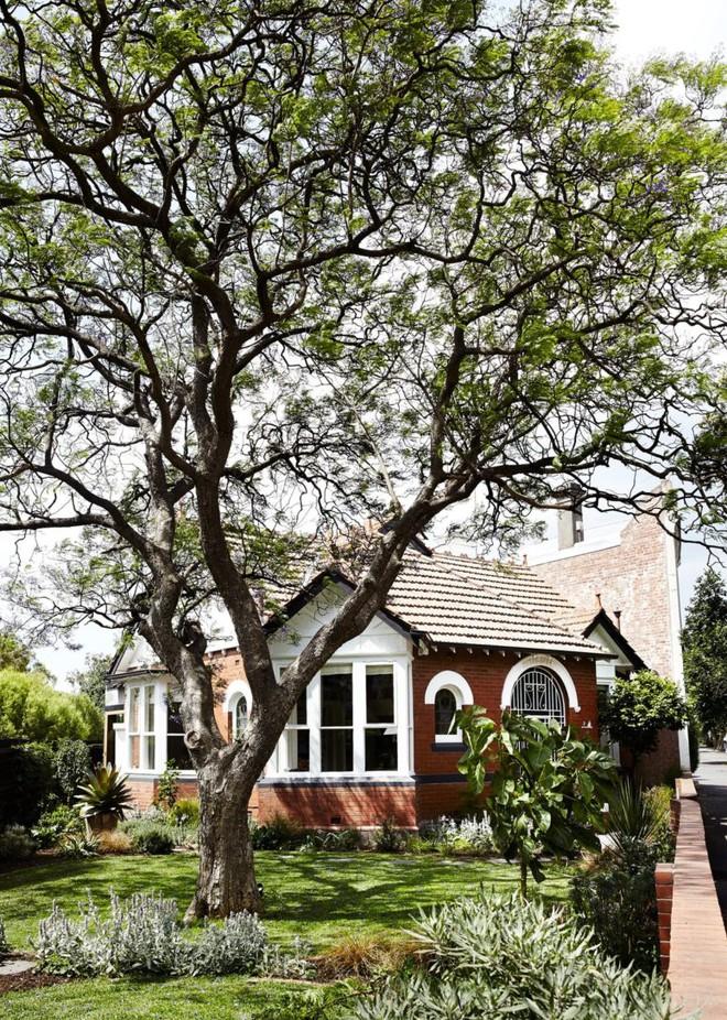 Ngôi nhà cấp 4 ẩn mình bên gốc cây cổ thụ có gì mà ai vào cũng muốn ở lại - Ảnh 1.