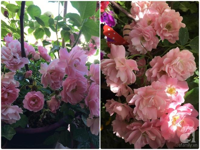 Bất ngờ với ban công chưa đầy 2m² nhưng dâu tây sai trĩu cành, hoa tươi thơm ngát - Ảnh 4.