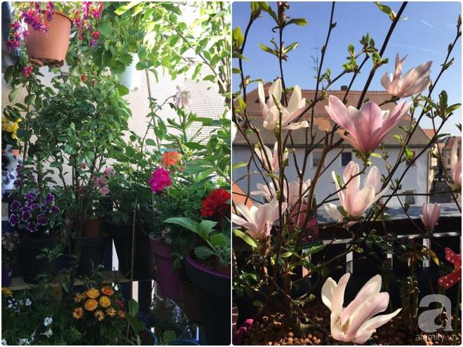 Bất ngờ với ban công chưa đầy 2m² nhưng dâu tây sai trĩu cành, hoa tươi thơm ngát - Ảnh 6.