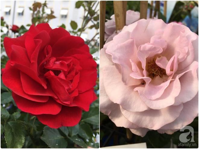 Bất ngờ với ban công chưa đầy 2m² nhưng dâu tây sai trĩu cành, hoa tươi thơm ngát - Ảnh 8.