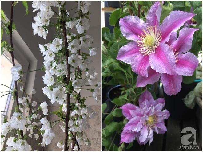 Bất ngờ với ban công chưa đầy 2m² nhưng dâu tây sai trĩu cành, hoa tươi thơm ngát - Ảnh 10.