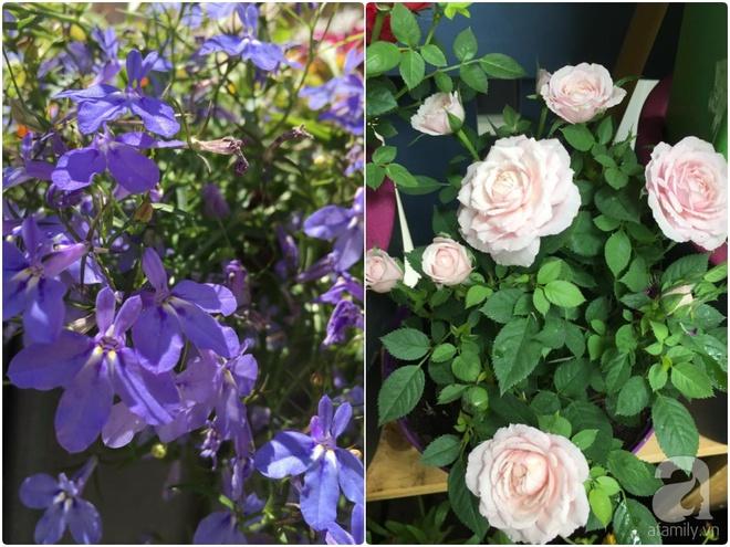 Bất ngờ với ban công chưa đầy 2m² nhưng dâu tây sai trĩu cành, hoa tươi thơm ngát - Ảnh 14.