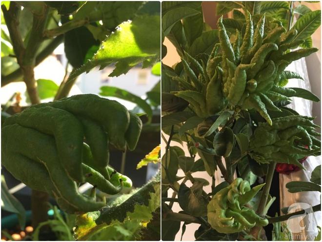 Bất ngờ với ban công chưa đầy 2m² nhưng dâu tây sai trĩu cành, hoa tươi thơm ngát - Ảnh 23.