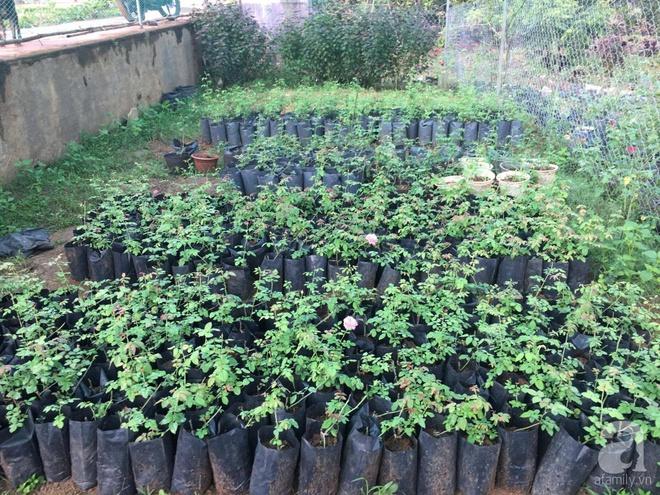 Khu vườn hoa hồng 2000 gốc gây thương nhớ cho bất cứ ai của chàng trai 9x ở Đồng Nai - Ảnh 4.