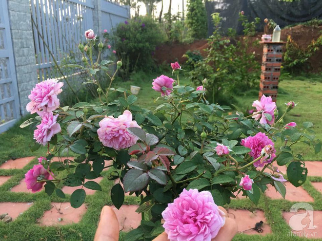 Khu vườn hoa hồng 2000 gốc gây thương nhớ cho bất cứ ai của chàng trai 9x ở Đồng Nai - Ảnh 12.