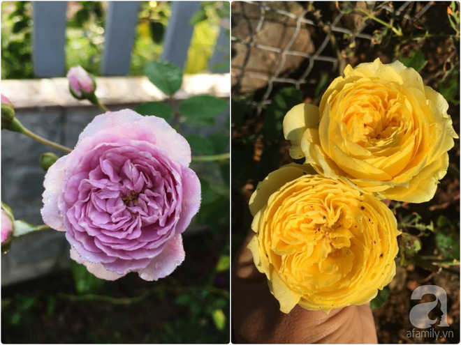 Khu vườn hoa hồng 2000 gốc gây thương nhớ cho bất cứ ai của chàng trai 9x ở Đồng Nai - Ảnh 14.