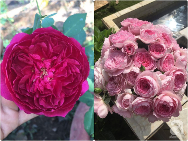 Khu vườn hoa hồng 2000 gốc gây thương nhớ cho bất cứ ai của chàng trai 9x ở Đồng Nai - Ảnh 19.