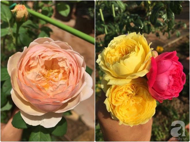 Khu vườn hoa hồng 2000 gốc gây thương nhớ cho bất cứ ai của chàng trai 9x ở Đồng Nai - Ảnh 24.