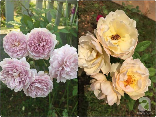 Khu vườn hoa hồng 2000 gốc gây thương nhớ cho bất cứ ai của chàng trai 9x ở Đồng Nai - Ảnh 27.