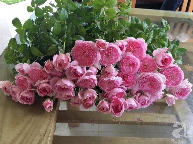 Khu vườn hoa hồng 2000 gốc gây thương nhớ cho bất cứ ai của chàng trai 9x ở Đồng Nai - Ảnh 30.