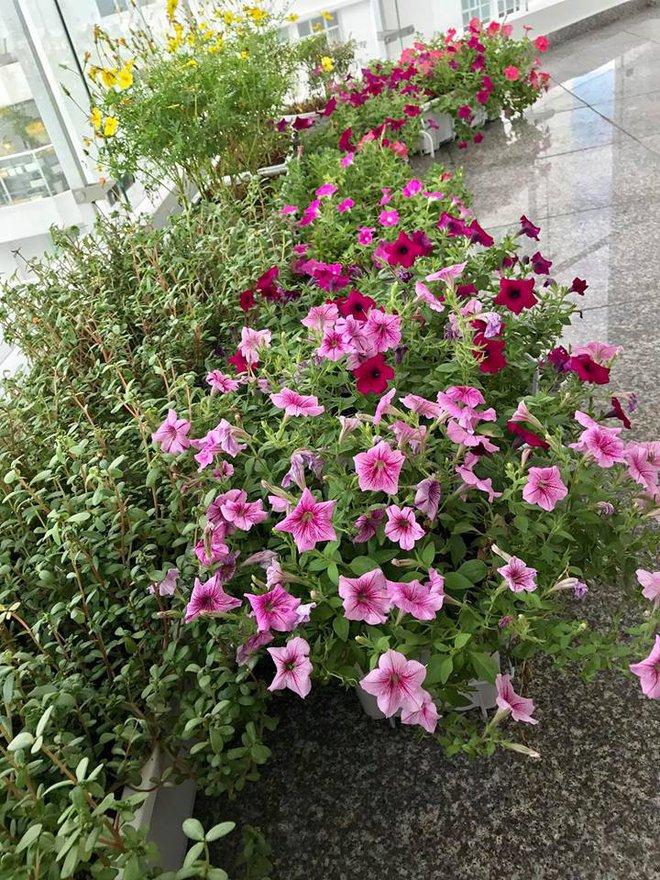 Ban công trên cao rực rỡ sắc hoa và rau sạch của diễn viên Thân Thúy Hà - Ảnh 4.