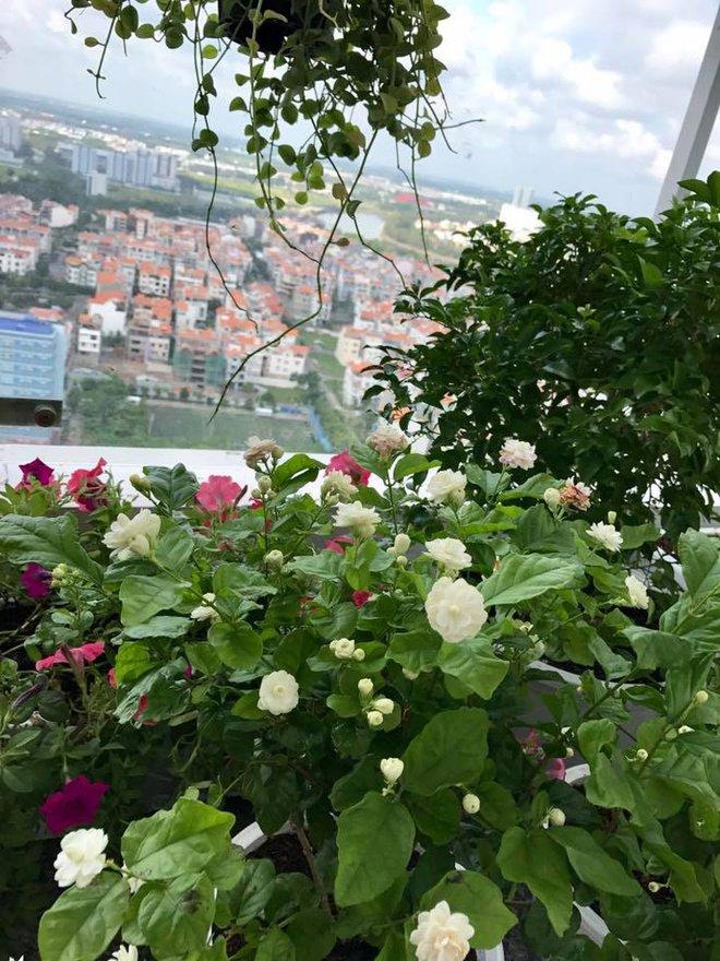 Ban công trên cao rực rỡ sắc hoa và rau sạch của diễn viên Thân Thúy Hà - Ảnh 9.