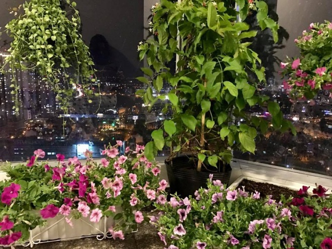 Ban công trên cao rực rỡ sắc hoa và rau sạch của diễn viên Thân Thúy Hà - Ảnh 11.