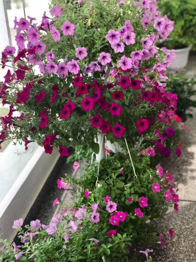 Ban công trên cao rực rỡ sắc hoa và rau sạch của diễn viên Thân Thúy Hà - Ảnh 14.