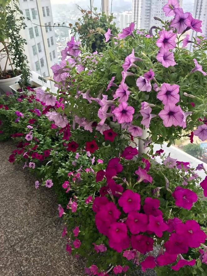 Ban công trên cao rực rỡ sắc hoa và rau sạch của diễn viên Thân Thúy Hà - Ảnh 15.
