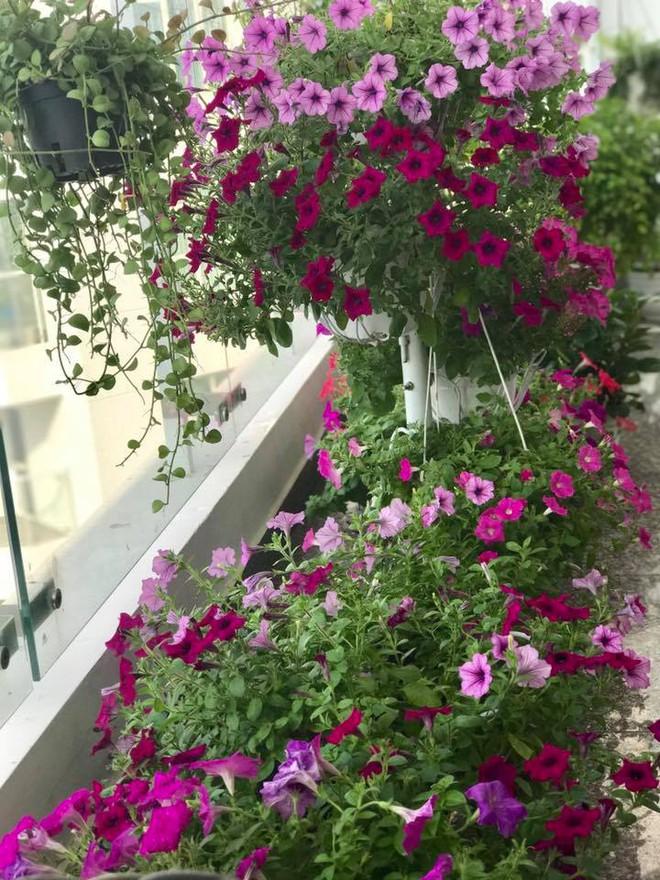 Ban công trên cao rực rỡ sắc hoa và rau sạch của diễn viên Thân Thúy Hà - Ảnh 16.