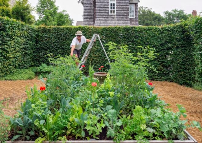5 bước cơ bản bạn cần biết nếu muốn trồng một khu vườn rau quả xanh tươi, đẹp mắt - Ảnh 1.
