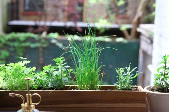 5 bước cơ bản bạn cần biết nếu muốn trồng một khu vườn rau quả xanh tươi, đẹp mắt - Ảnh 2.