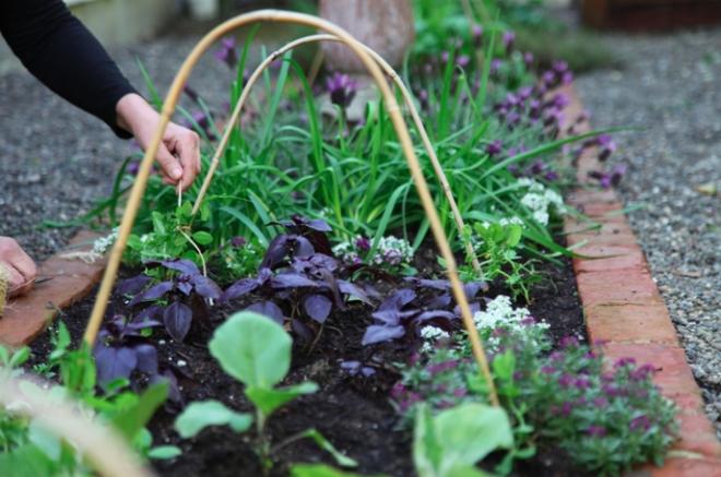 5 bước cơ bản bạn cần biết nếu muốn trồng một khu vườn rau quả xanh tươi, đẹp mắt - Ảnh 3.
