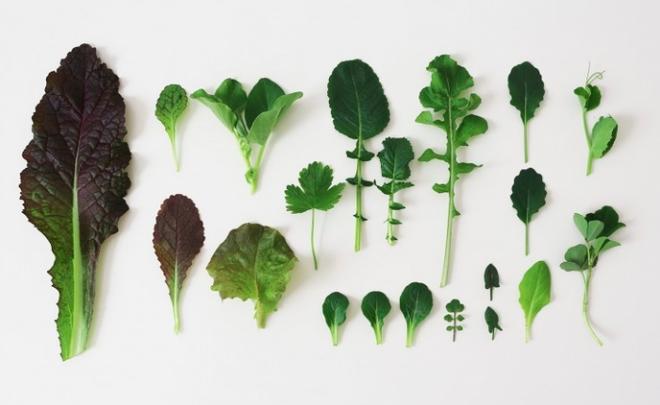 5 bước cơ bản bạn cần biết nếu muốn trồng một khu vườn rau quả xanh tươi, đẹp mắt - Ảnh 4.