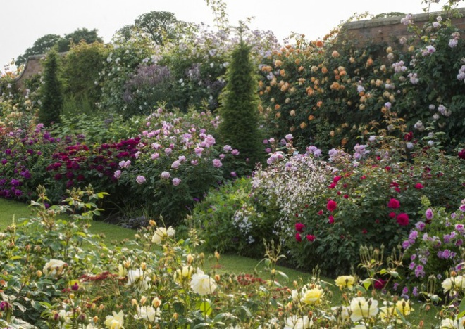 Khu vườn hoa hồng đẹp hơn cổ tích của người đàn ông được phong danh là Vĩ nhân hoa hồng của thế giới - Ảnh 7.