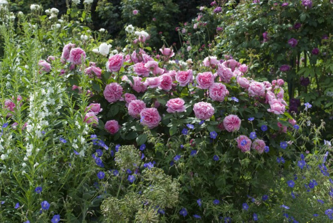 Khu vườn hoa hồng đẹp hơn cổ tích của người đàn ông được phong danh là Vĩ nhân hoa hồng của thế giới - Ảnh 9.