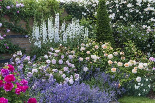 Khu vườn hoa hồng đẹp hơn cổ tích của người đàn ông được phong danh là Vĩ nhân hoa hồng của thế giới - Ảnh 10.