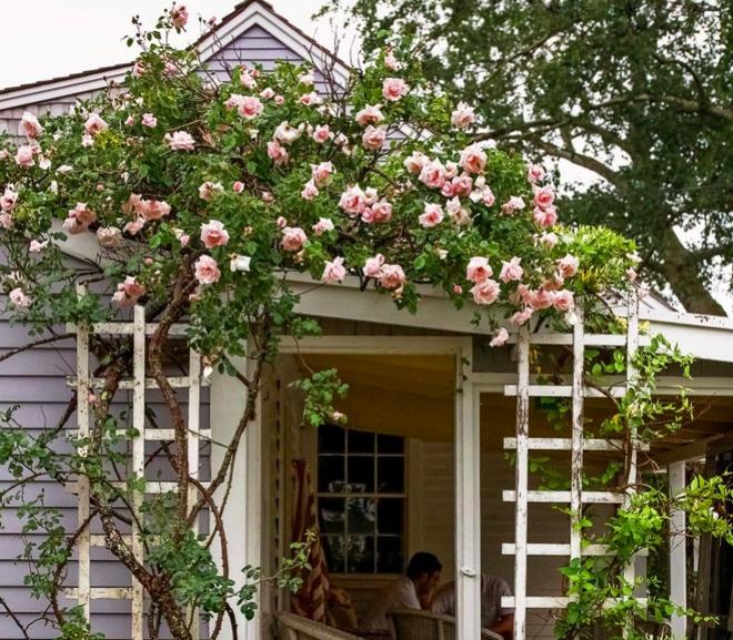 Kinh nghiệm tạo giàn hoa leo đẹp như trong mơ của cặp vợ chồng yêu hoa - Ảnh 2.