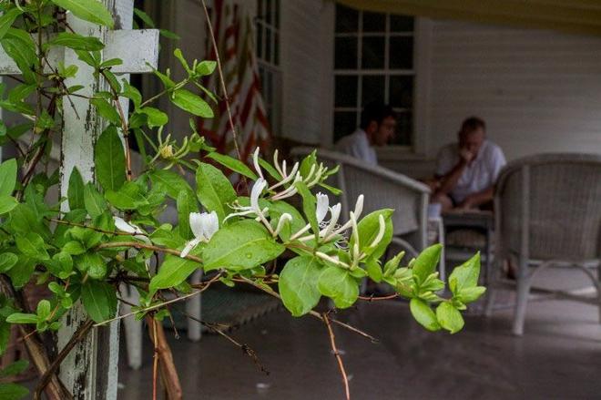 Kinh nghiệm tạo giàn hoa leo đẹp như trong mơ của cặp vợ chồng yêu hoa - Ảnh 5.