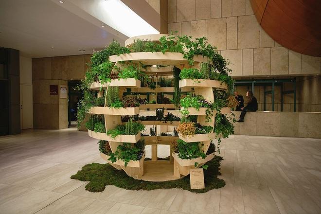 Khu vườn mini bằng gỗ giúp công cuộc trồng rau sạch trong nhà của nông dân phố dễ dàng hơn - Ảnh 1.